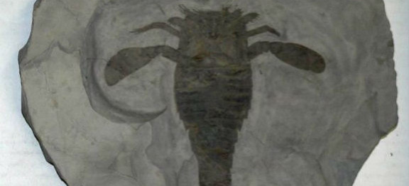 Giant's Rib Discovery Centre Acquires Rare Fossil for Display.