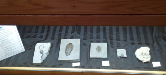 Giant's Rib Receives Significant Fossil Donation