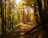 Guided Hike Program
